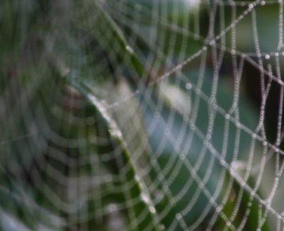 Spinnen bestrijden