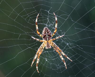 Spinnenbestrijding